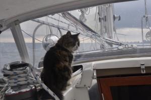 Velcro enjoying an ocean sail